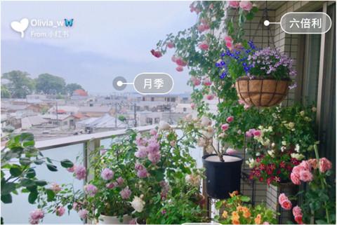 阳台植物装修搭配